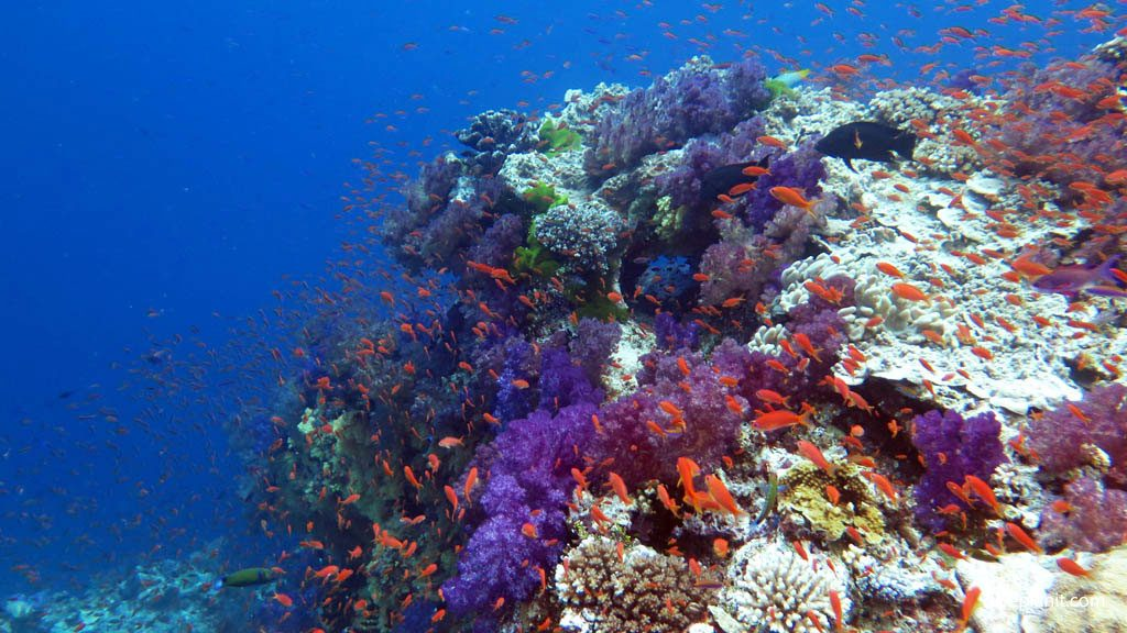 2 1024x576 - Why Having A Scuba Diving License Worth It